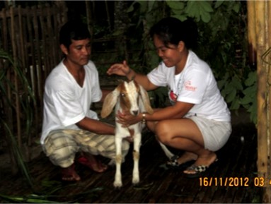 jennifer-livestock-crop